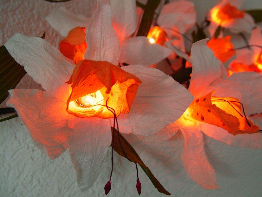 Orchid Cathariya