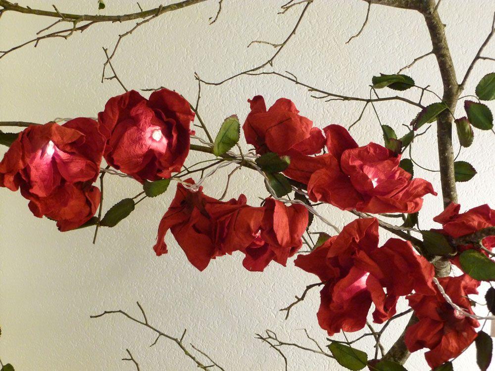 Giant Rose rot